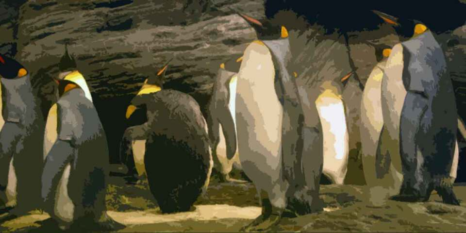 project dizary, penguin put eteria, Jasper Polane. Panda vertelt over de mooiste zomervakantie plekjes van Eteria