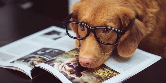 Lekker lezen tijdens de Lees Een Boek Dag